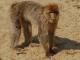 Aap wikiemdia commons - ss door EMG = Evolution Media Group